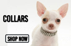chihuahuacollarsbanner