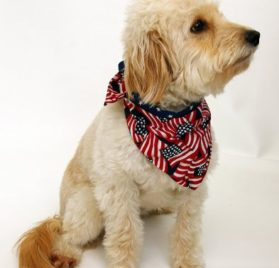 Patriotic Bandana for Dogs - 3