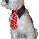 "Calvin K-nine Necktie (Red, S) 5"" Long - 3"