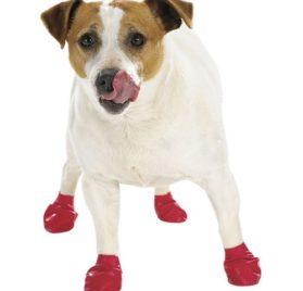 Dog Boots Pawz Set of 12 XXSmall-1