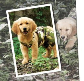 Urban Dog Wear Military Overall - 1