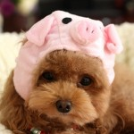Alfie Pet by Petoga Couture - Qeno Pig Hat Party Costume (for Small Dogs & Cats) - Color: Pink - 1