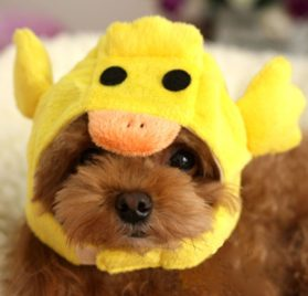 Alfie Pet by Petoga Couture - Qeno Duck Hat Party Costume (for Small Dogs & Cats) - Color: Yellow - 1