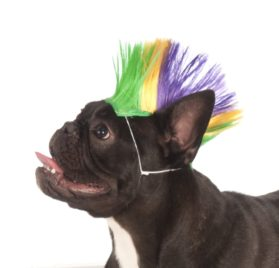 Rubies Costume Company Mardi Gras Pet Mohawk Wig, Small/Medium - 1