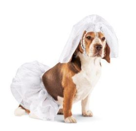 Click to open expanded view Bride Dress Up Dog Halloween Costume
