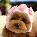 Alfie Pet by Petoga Couture - Qeno Pig Hat Party Costume (for Small Dogs & Cats) - Color: Pink - 2