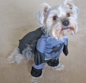 Alfie Pet by Petoga Couture - Superhero Costume Batman - 2