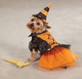 Casual Canine Spellhound Witch Pet Costume - Black - 2