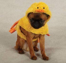 Zack & Zoey Quackers Duck Pet Costume - Yellow - 3
