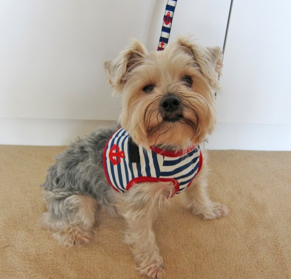 Vince Sailor Harness and Leash Set