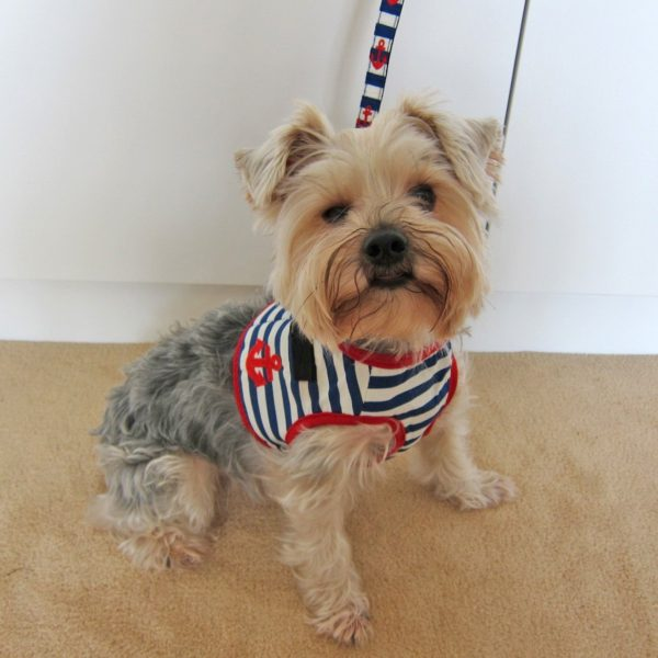 Alfie Couture Designer Pet Accessory - Vince Sailor Harness and Leash Set