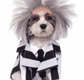 Rubies Costume Company Beetlejuice Pet Costume, Small
