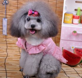 Fairy Denim Dog Dress for Dog Clothes Charming Cozy Dog Shirt Pet Dress Free Shipping-2