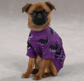 Zack & Zoey Bat Pet Tee Shirt-1