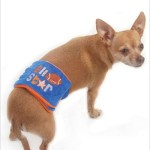 """All Star Football Belly Band for Dogs - XS (10""""-13"""" Rear Girth) - 1"""