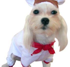 Chef Pet Costume 2