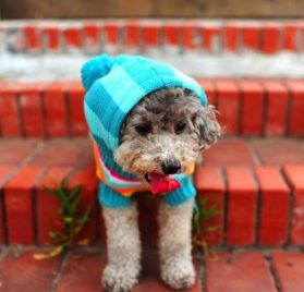Striped Pet Dog Hoodie Sweater Pullover Blue - 2