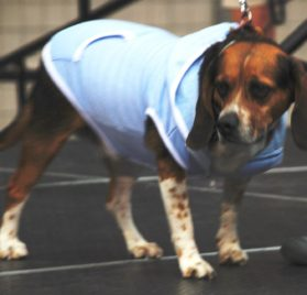 Dog Hoodie Sweatshirt Jacket, BLUE Small - 6