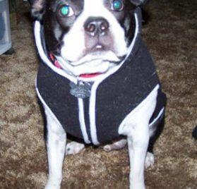 Dog Hoodie Sweatshirt Jacket, Black XS - 7