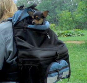 Tough Traveler Double-Decker Comfort Dog Backpack - 1