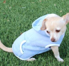 Dog Hoodie Sweatshirt Jacket, BLUE XS - 4