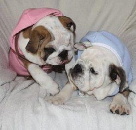Dog Hoodie Sweatshirt Jacket, PINK Small - 1