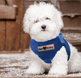 Dog Harness with a choke-free style