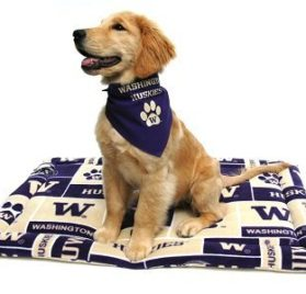 "University of Washington Huskies Bandana (S) Ties on 9"" - 10"" neck - 2"