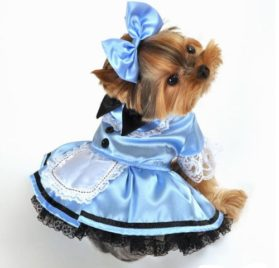 Swashbuckler Pirate Girl Dog Costume Size: X-Small