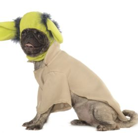 Star Wars Yoda Halloween Dog Costume - 1