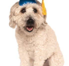 Rubies Costume Blue Graduation Hat Pet Accessory, Small/Medium - 1