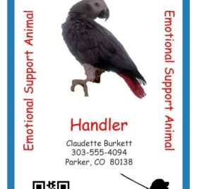 Personalized Service Animal ID Card with Online Registration 2