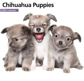 Chihuahua Puppies Mini 2015 Wall Calendar