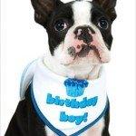 "Birthday Scarf for Boy Dogs - White w/ Blue for Boys - LG (15"" - 20"" neck) - 1"
