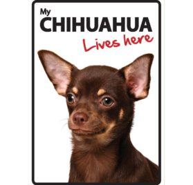 Magnet & Steel Chihuahua Lives Here Plastic Sign