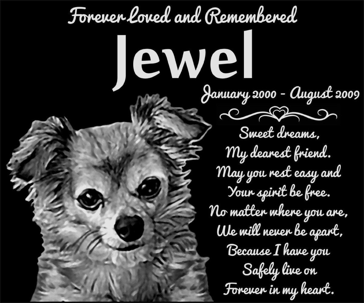 personalized long haired chihuahua dog pet memorial 12 x10 engraved