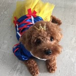 Alfie Pet Apparel by Petoga Couture - Snow White for Party Halloween Special Events Costume 9