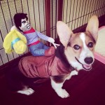 Alfie Pet Apparel by Petoga Couture - Tony the Cowboy for Party Halloween Special Events Costume 6