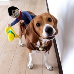 Alfie Pet Apparel by Petoga Couture - Tony the Cowboy for Party Halloween Special Events Costume 8