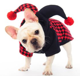 Dogloveit Halloween Clown Costumes Soft Dog Clothes For Dog Cat Puppy Pet,X-small