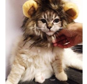Dogloveit Pet Costume Lion Mane Wig for Dog Cat Halloween Dress up with Ears 2