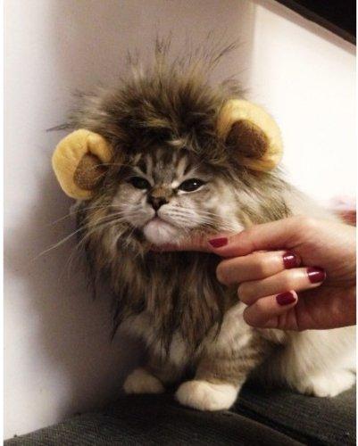 cat stevens wiki