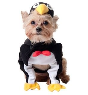 Penguin Dog Halloween Costume (xx-small)  sc 1 st  Chihuahua Kingdom & Penguin Dog Halloween Costume (xx-small) - Chihuahua Kingdom