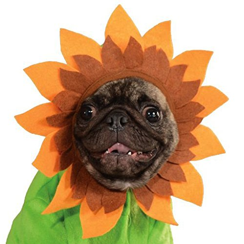 ... Rubies Costume Halloween Classics Collection Pet Costume Small Sunflower 3  sc 1 st  Chihuahua Kingdom & Rubies Costume Halloween Classics Collection Pet Costume Small