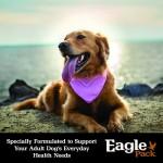 Eagle Pack Natural Dry Dog Food, Lamb Meal & Brown Rice Formula, 30-Pound Bag 2