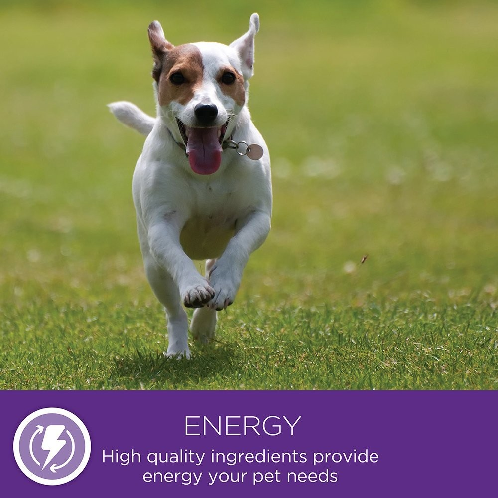 Blue Small Breed Dog Food Review