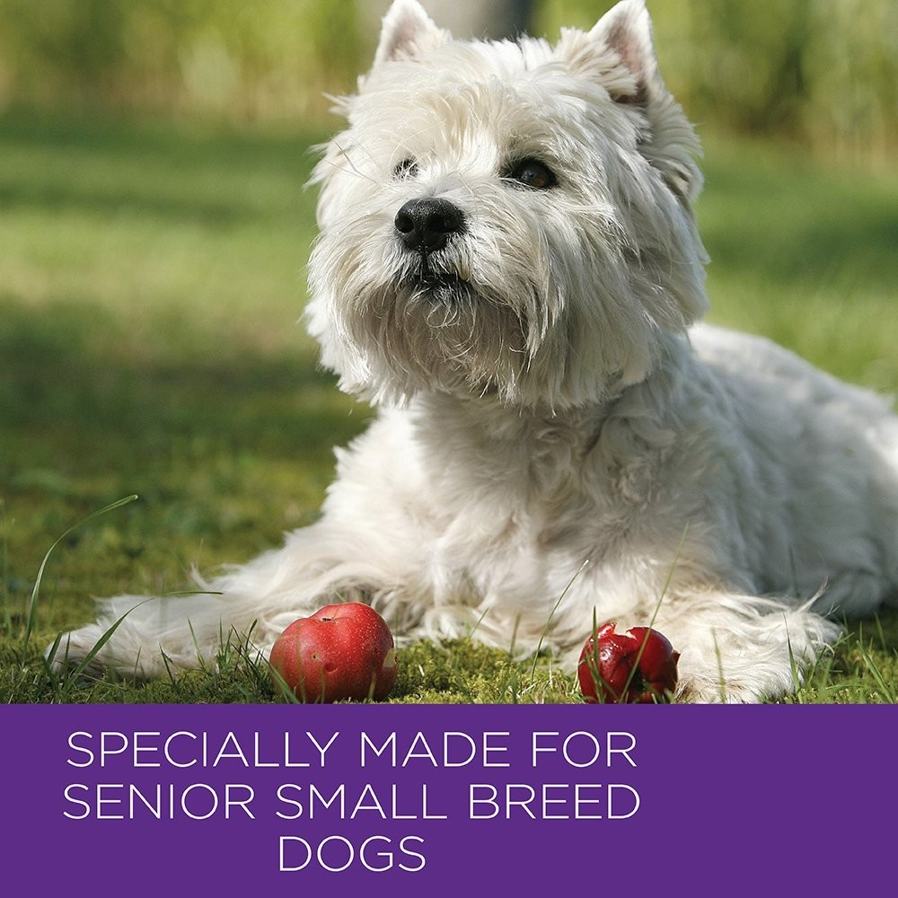Small Dogs For Seniors