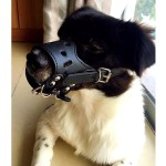 Alfie Pet by Petoga Couture - Brook Adjustable Synthetic Leather Basket Muzzle 2