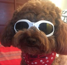 Alfie Pet by Petoga Couture - Larry Sun Glasses for Dogs and Cats 2