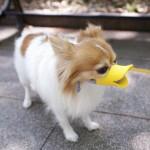 Pet Protection Dog Silicone Duck Bill Design Muzzle Adjustable Poodle Face Lip Mouth Duckbill Muzzle No Bite No Bark 6